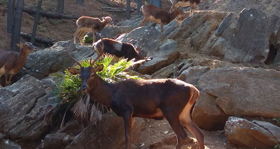 Fauna en la Ecoreserva Ojén
